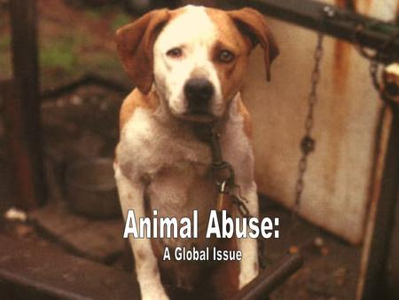 Animal abuse occurs when an animal, domesticated or wild, is harmed physically intentionally or not. The physical abuse, if it doesnt lead to death, can.