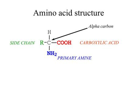 Amino acid structure CARBOXYLIC ACID PRIMARY AMINE C H NH 2 COOH R SIDE CHAIN Alpha carbon.