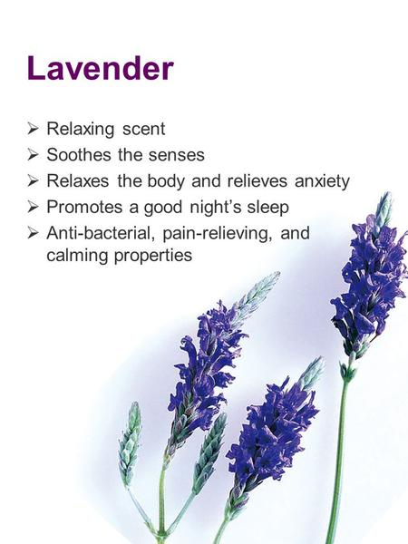 Lavender Relaxing scent Soothes the senses Relaxes the body and relieves anxiety Promotes a good nights sleep Anti-bacterial, pain-relieving, and calming.