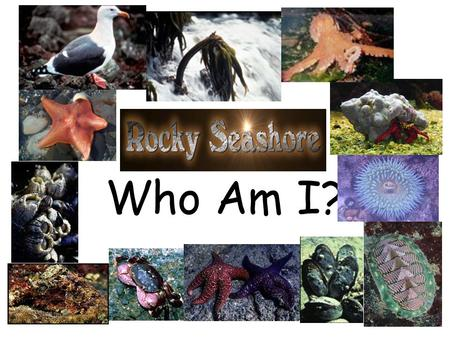 Who Am I?. I have five arms and hundreds of tiny tube feet. Who Am I? Pick your answer.