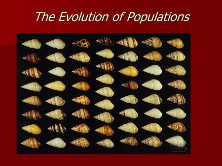 The Evolution of Populations. Hardy-Weinberg Theorem Serves as a model for the genetic structure of a nonevolving population (equilibrium) Serves as a.