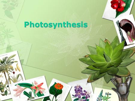 Photosynthesis 1. f. Students know usable energy is captured from sunlight by chloroplasts and is stored through the synthesis of sugar from carbon dioxide.