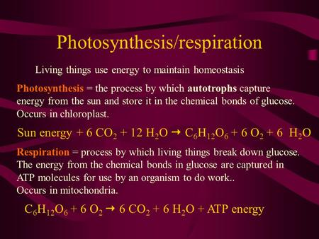Photosynthesis/respiration Living things use energy to maintain homeostasis Photosynthesis = the process by which autotrophs capture energy from the sun.