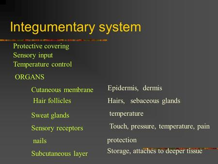 Integumentary system Protective covering Sensory input Temperature control ORGANS Cutaneous membrane Epidermis, dermis Hair folliclesHairs, sebaceous glands.