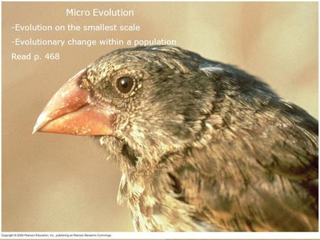 Micro Evolution -Evolution on the smallest scale -Evolutionary change within a population Read p. 468.