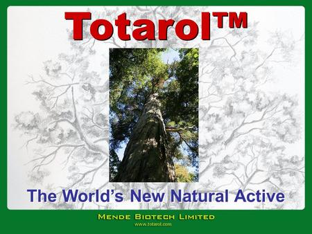 The Worlds New Natural Active Totarol. Mende Biotech Limited was established in 1999 to: Develop and commercialise the manufacture of Totarol Focus on.