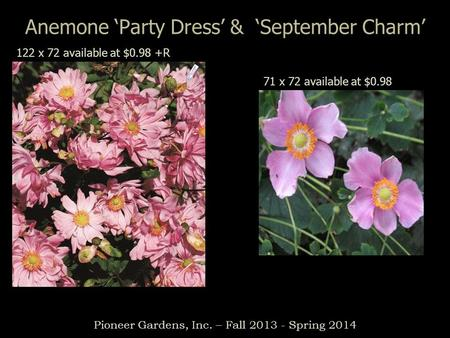 Anemone Party Dress & September Charm Pioneer Gardens, Inc. – Fall 2013 - Spring 2014 122 x 72 available at $0.98 +R 71 x 72 available at $0.98.