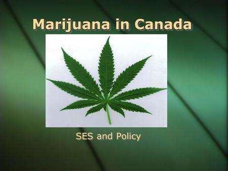 Marijuana in Canada SES and Policy What is Marijuana? Cannabis Sativa or Cannabis Indica. Cannabis Sativa or Cannabis Indica. Produces Tetrahydrocannabinol.