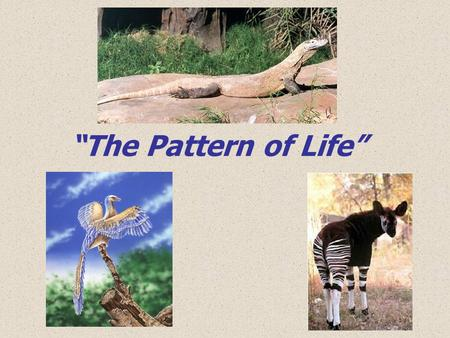 """The Pattern of Life""."