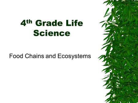 Food Chains and Ecosystems
