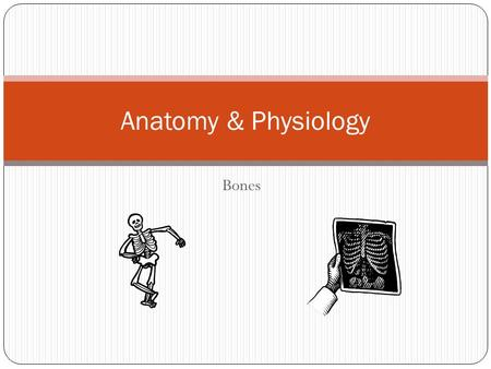 Bones Anatomy & Physiology. Skeleton System Infant Skeleton about 300 bones Adult about 206 bones.