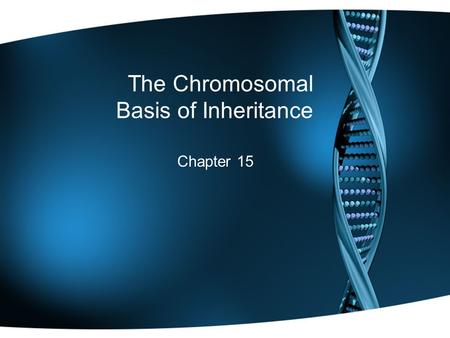 The Chromosomal Basis of Inheritance Chapter 15. The Chromosomal Theory of Inheritance Mendelian genes have specific loci (positions) along chromosomes.
