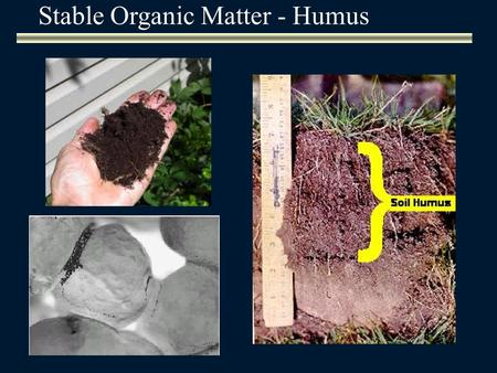 Stable Organic Matter - Humus. Humic substancesNon-humic substances Fulvic acidHumic acidHumin i.e. polysaccharides, proteins, lignins, etc. In their.