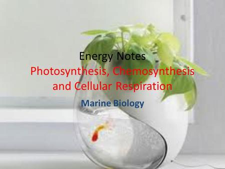 Energy Notes Photosynthesis, Chemosynthesis and Cellular Respiration Marine Biology.