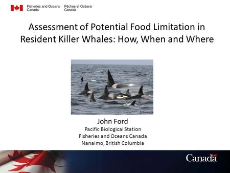 Assessment of Potential Food Limitation in Resident Killer Whales: How, When and Where John Ford Pacific Biological Station Fisheries and Oceans Canada.