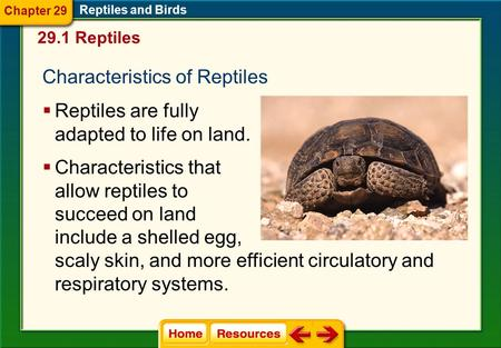 Characteristics of Reptiles Reptiles are fully adapted to life on land. 29.1 Reptiles Reptiles and Birds Chapter 29 Characteristics that allow reptiles.