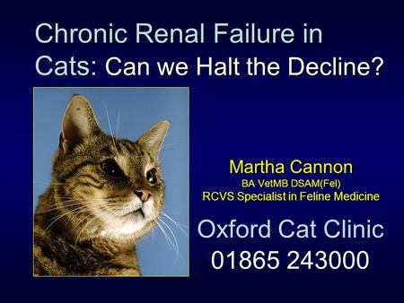 Chronic Renal Failure in Cats: Can we Halt the Decline?