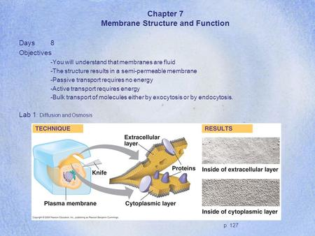 Chapter 7 Membrane Structure and Function Days8 Objectives -You will understand that membranes are fluid -The structure results in a semi-permeable membrane.