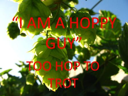 I AM A HOPPY GUY TOO HOP TO TROT. What are Hops? Hops are one of the basic ingredients in beer brewing - the others being grain, yeast, and water Flower.