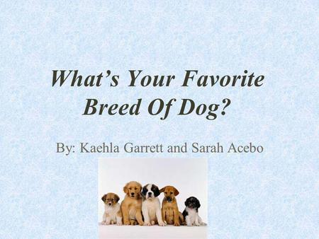 Whats Your Favorite Breed Of Dog? By: Kaehla Garrett and Sarah Acebo.