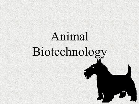 Animal Biotechnology. Animal Biotech Animals provide a number of products we use in every day life. Milk Leather Wool.