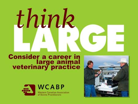 Consider a career in large animal veterinary practice.