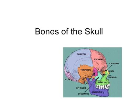 Bones of the Skull. Frontal Forehead Superior eye orbits Frontal sinus Inferior connection –Zygomatic process –Temporal bone.