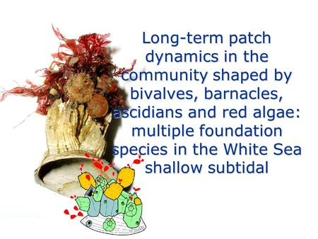Long-term patch dynamics in the community shaped by bivalves, barnacles, ascidians and red algae: multiple foundation species in the White Sea shallow.