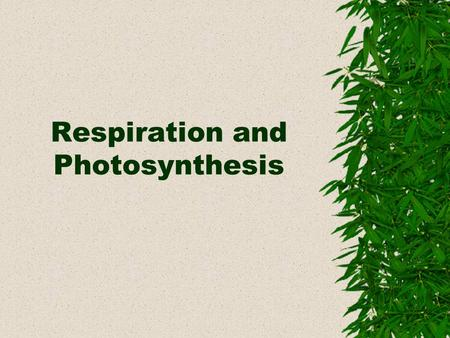 Respiration and Photosynthesis. Products Carbon Dioxide + Water Glucose + Oxygen + Water Photosynthesis Equation 6CO 2 +12H 2 O C 6 H 12 O 6 +6O 2 +6H.