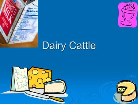 Dairy Cattle. Important Terms Butterfat- fat of milk, solid part of milk before being processed Butterfat- fat of milk, solid part of milk before being.