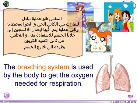 © Boardworks Ltd 2004 1 of 20 © Boardworks Ltd 2005 1 of 24 The breathing system is used by the body to get the oxygen needed for respiration. التنفس هو