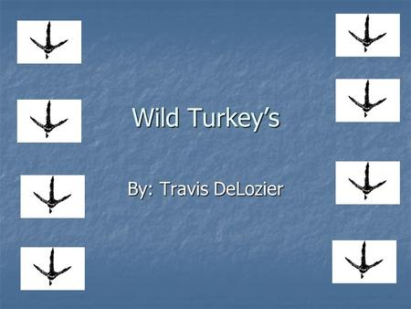 Wild Turkeys By: Travis DeLozier. Wild Turkey Trivia Turkeys can run up to speeds of 20 mph? Turkeys can run up to speeds of 20 mph? A young turkey is.