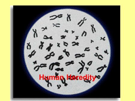 Human Heredity. 1) Autosomes –all the chromosomes except the sex chromosomes (in humans, there are 22 pair) 2) Sex chromosomes –The sex-determining chromosomes,