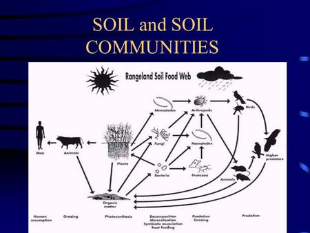 SOIL and SOIL COMMUNITIES. This typical sagebrush community is an illustration of the soil biological communities that occur on range land throughout.