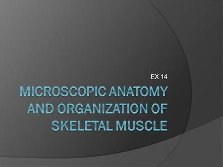 Microscopic Anatomy and Organization of Skeletal Muscle