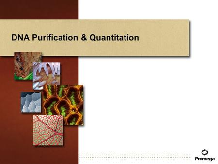 DNA Purification & Quantitation. DNA Purification Requirements Many applications require purified DNA. Purity and amount of DNA required (and process.