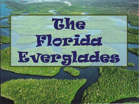 The Florida Everglades. The Everglades is also known as A: The Lake of Water Lilies B: The River of Grass C: The River of Mangroves D: The River of Sawgrass.