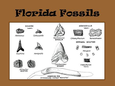 Florida Fossils. Only fossils of invertebrates are found in Florida. A: True B: False.