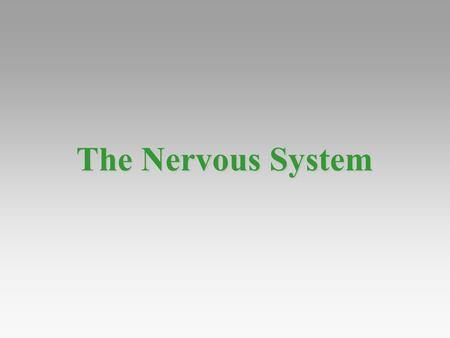 The Nervous System. Nervous systems Perform the three overlapping functions of sensory input, integration, and motor output Perform the three overlapping.
