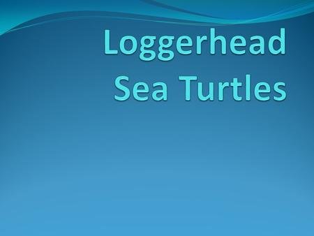 The Loggerhead Sea Turtle is the South Carolina State Reptile.