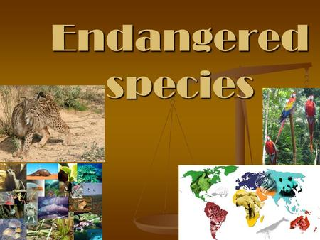 Endangered species. Endangered species is a population of organism which is at a risk of becoming extinct due to few in number, threatened by changing.