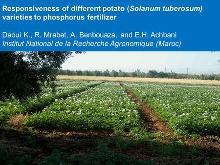 Responsiveness of different potato (Solanum tuberosum) varieties to phosphorus fertilizer Daoui K., R. Mrabet, A. Benbouaza, and E.H. Achbani Institut.