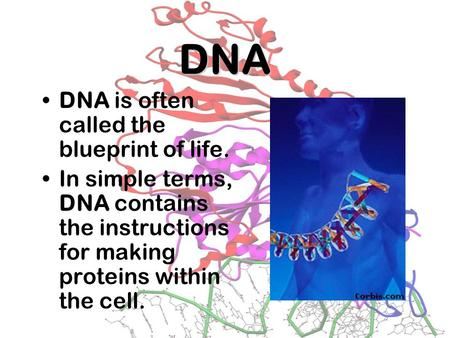 DNA DNA is often called the blueprint of life.