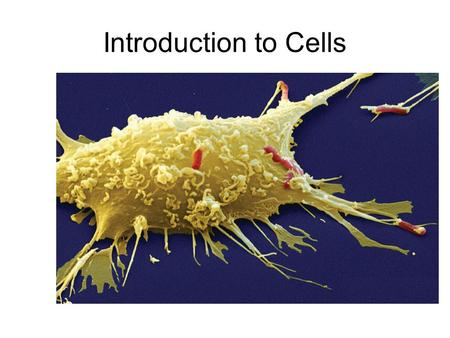 Introduction to Cells.