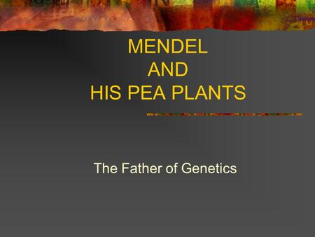 MENDEL AND HIS PEA PLANTS The Father of Genetics.