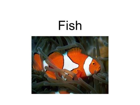 Fish. What are Fish? Fish are aquatic vertebrates (animals with backbones) with fins for appendages. They breathe by means of gills. Fish make up the.