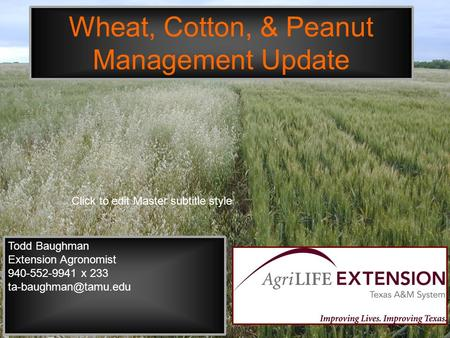 Click to edit Master subtitle style Wheat, Cotton, & Peanut Management Update Todd Baughman Extension Agronomist 940-552-9941 x 233