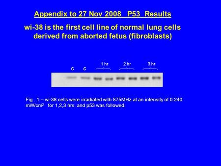 Appendix to 27 Nov 2008 P53 Results wi-38 is the first cell line of normal lung cells derived from aborted fetus (fibroblasts) Fig. 1 – wi-38 cells were.