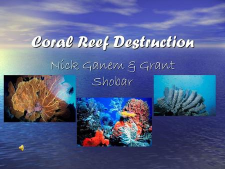 Coral Reef Destruction