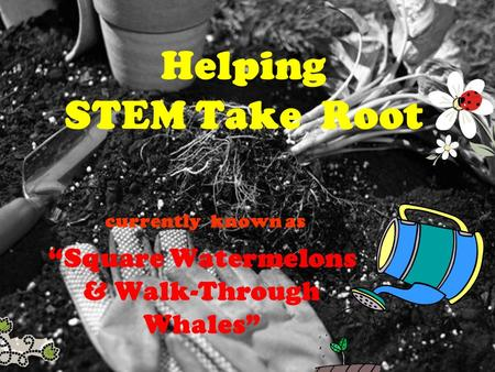 Helping STEM Take Root currently known as Square Watermelons & Walk-Through Whales.